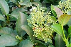 Flor de la mala hierba de cocodrilo Foto de archivo libre de regalías