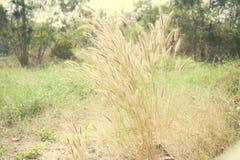 Flor de la mala hierba del color del vintage Imagen de archivo