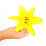 Flor de la mano del lirio Imagenes de archivo