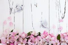 Flor de la manzana de la primavera con los pájaros de los pares en fondo de madera del viejo vintage Fotografía de archivo