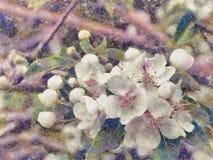 Flor de la manzana de la primavera en lona stock de ilustración
