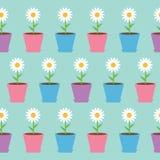 Flor de la manzanilla de la margarita blanca en pote Papel de embalaje inconsútil del modelo de la manzanilla, plantilla de la ma Foto de archivo libre de regalías