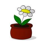 Flor de la manzanilla en el pote colorized Fotografía de archivo libre de regalías
