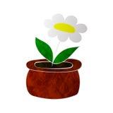 Flor de la manzanilla en textura colorized pote Fotografía de archivo