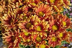 Flor de la margarita anaranjada Foto de archivo