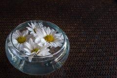 Flor de la margarita blanca en bol de vidrio con el backgroun de bambú marrón de la estera Fotografía de archivo libre de regalías