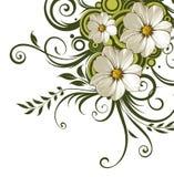Flor de la margarita blanca y vides verdes Foto de archivo