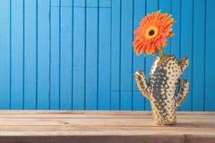 Flor de la margarita del Gerbera en florero del cactus fotos de archivo libres de regalías