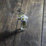 Flor de la margarita en el tarro de cristal Fotos de archivo