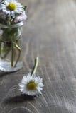 Flor de la margarita en el tarro de cristal Foto de archivo