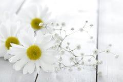 Flor de la margarita en fondo de madera Fotografía de archivo libre de regalías