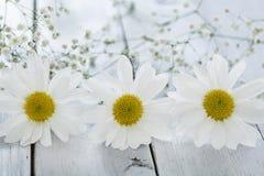 Flor de la margarita en fondo de madera Imagenes de archivo