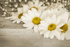 Flor de la margarita en fondo de madera Fotos de archivo