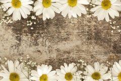 Flor de la margarita en fondo de madera Imagen de archivo libre de regalías