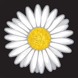 Flor de la margarita en negro Imagen de archivo