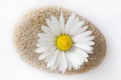 Flor de la margarita en piedra Imagen de archivo libre de regalías