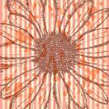Flor de la margarita, fondo del bosquejo del vector Foto de archivo
