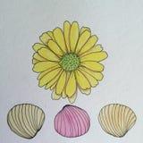Flor de la margarita y pluma de las cáscaras del mar y dibujo amarillos de la tinta Foto de archivo