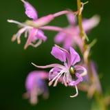 Flor de la montaña púrpura con el insecto Imágenes de archivo libres de regalías
