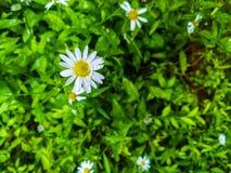 Flor de la naturaleza Fotos de archivo libres de regalías
