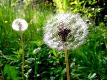 Flor de la naturaleza Foto de archivo libre de regalías