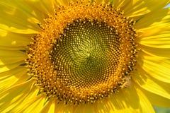 Flor de la naturaleza imagenes de archivo