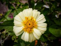 Flor de la naturaleza de la belleza fotografía de archivo