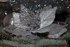 Flor de la Navidad Fotografía de archivo libre de regalías