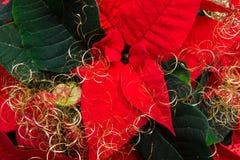 Flor de la Navidad Fotografía de archivo