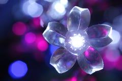 Flor de la Navidad blanca Foto de archivo