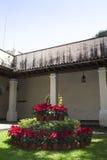 Flor de la Navidad en el jardín mexicano Fotos de archivo libres de regalías