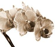 Flor de la orquídea Imagen de archivo libre de regalías