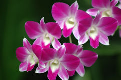 Flor de la orquídea Foto de archivo