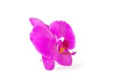 Flor de la orquídea, aislada fotos de archivo