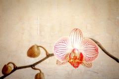 Flor de la orquídea del Grunge Foto de archivo libre de regalías