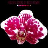 Flor de la orquídea del vector Libre Illustration