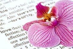 Flor de la orquídea en amor Imagen de archivo libre de regalías