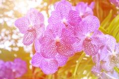 Flor de la orquídea en el jardín en el invierno o el día de primavera Fotos de archivo