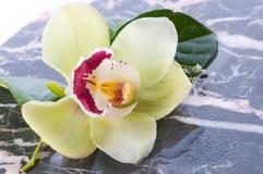 Flor de la orquídea en el mármol Imagen de archivo libre de regalías
