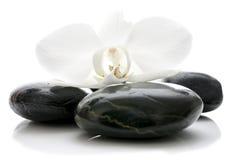 Flor de la orquídea en los ZENES Stone Fotografía de archivo