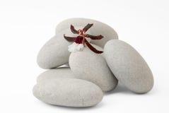 Flor de la orquídea en rocas Imagen de archivo