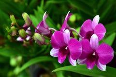 flor de la orquídea, naturaleza, orquídea Fotografía de archivo libre de regalías