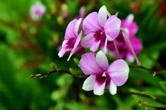 flor de la orquídea, naturaleza, orquídea Imagenes de archivo