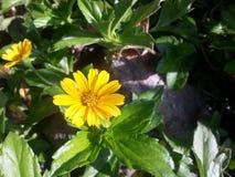 Flor de la orquídea de Naturel del srilanaka imagen de archivo libre de regalías