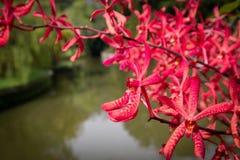Flor de la orquídea por el río con el fondo del bokeh imagenes de archivo