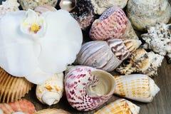 Flor de la orquídea y fondo de la concha marina Imagenes de archivo