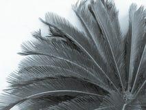 Flor de la palma aislada en el fondo blanco Imágenes de archivo libres de regalías