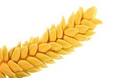 Flor de la palma de coco Fotos de archivo libres de regalías