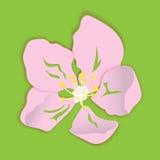 Flor de la papiroflexia de Apple Imágenes de archivo libres de regalías