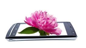 Flor de la peonía en smartphone de la exhibición collage Fotografía de archivo libre de regalías